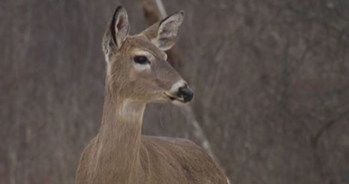 Hunters question if whitetail deer safe to eat with EEE outbreak