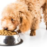 How Many Cups Of Dog Food In 1kg?