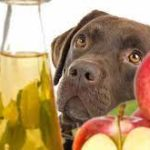 What Age Can You Give Apple Cider Vinegar To Dogs?